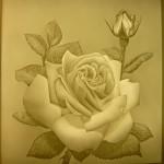 PLP2275 Rose  15x15cm